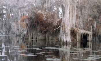 Caddo duck blinds span many generations.
